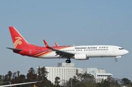 B747‐400さんが、成田国際空港で撮影した深圳航空 737-87Lの航空フォト(飛行機 写真・画像)