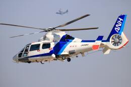 だいふくさんが、名古屋飛行場で撮影したオールニッポンヘリコプター AS365N2 Dauphin 2の航空フォト(飛行機 写真・画像)
