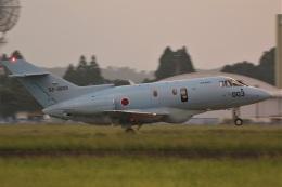 DONKEYさんが、新田原基地で撮影した航空自衛隊 U-125A (BAe-125-800SM)の航空フォト(飛行機 写真・画像)