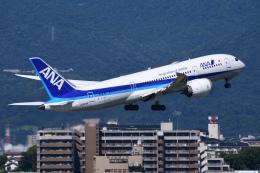 航空フォト:JA804A 全日空 787-8 Dreamliner