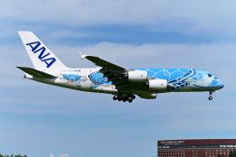 すしねこさんが、成田国際空港で撮影した全日空 A380-841の航空フォト(飛行機 写真・画像)