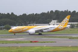 airdrugさんが、成田国際空港で撮影したスクート 787-8 Dreamlinerの航空フォト(飛行機 写真・画像)