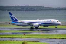 pan_kumaさんが、羽田空港で撮影した全日空 787-8 Dreamlinerの航空フォト(飛行機 写真・画像)