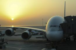 Sharp Fukudaさんが、ドーハ・ハマド国際空港で撮影したカタール航空 A380-861の航空フォト(飛行機 写真・画像)