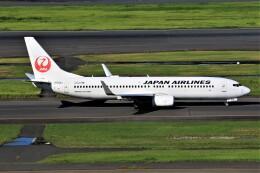 みるぽんたさんが、羽田空港で撮影した日本航空 737-846の航空フォト(飛行機 写真・画像)