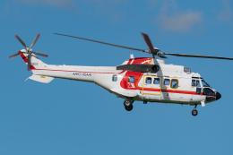 Tomo-Papaさんが、成田国際空港で撮影した朝日航洋 AS332L1 Super Pumaの航空フォト(飛行機 写真・画像)