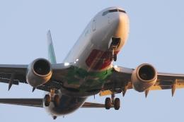 キャスバルさんが、サンディエゴ国際空港で撮影したトランサヴィア 737-8K2の航空フォト(飛行機 写真・画像)