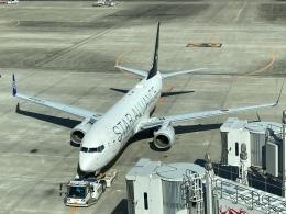 ねこかいぬさんが、羽田空港で撮影した全日空 737-881の航空フォト(飛行機 写真・画像)