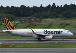 チャーリーマイクさんが、成田国際空港で撮影したタイガーエア台湾 A320-232の航空フォト(飛行機 写真・画像)