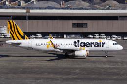 Tatsuya.Kさんが、成田国際空港で撮影したタイガーエア台湾 A320-232の航空フォト(飛行機 写真・画像)