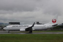 航空フォト:JA311J 日本航空 737-800
