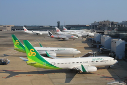 Rsaさんが、成田国際空港で撮影した春秋航空日本 737-81Dの航空フォト(飛行機 写真・画像)