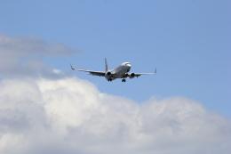 VFRさんが、羽田空港で撮影した日本航空 737-846の航空フォト(飛行機 写真・画像)