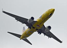がいなやつさんが、福岡空港で撮影したスカイマーク 737-8ALの航空フォト(飛行機 写真・画像)
