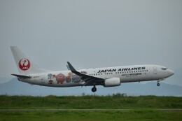 Ryo-TKSさんが、徳島空港で撮影した日本航空 737-846の航空フォト(飛行機 写真・画像)