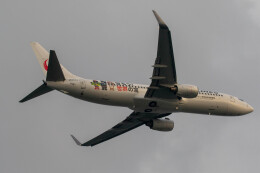 紫電さんが、羽田空港で撮影した日本航空 737-846の航空フォト(飛行機 写真・画像)