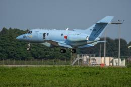 あけみさんさんが、茨城空港で撮影した航空自衛隊 U-125A(Hawker 800)の航空フォト(飛行機 写真・画像)
