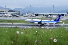 くれないさんが、高松空港で撮影した全日空 737-8ALの航空フォト(飛行機 写真・画像)
