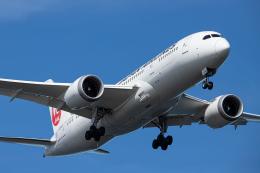 SGR RT 改さんが、羽田空港で撮影した日本航空 787-8 Dreamlinerの航空フォト(飛行機 写真・画像)