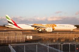 S.Hayashiさんが、成田国際空港で撮影したエミレーツ航空 777-31H/ERの航空フォト(飛行機 写真・画像)