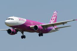 panchiさんが、成田国際空港で撮影したピーチ A320-214の航空フォト(飛行機 写真・画像)