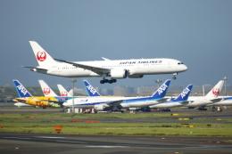 ▲®さんが、羽田空港で撮影した日本航空 787-9の航空フォト(飛行機 写真・画像)