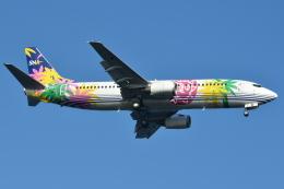 Deepさんが、羽田空港で撮影したスカイネットアジア航空 737-4M0の航空フォト(飛行機 写真・画像)