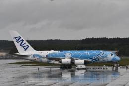 YOSANさんが、新千歳空港で撮影した全日空 A380-841の航空フォト(飛行機 写真・画像)