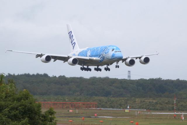 rjccさんが、新千歳空港で撮影した全日空 A380-841の航空フォト(飛行機 写真・画像)