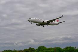平凡なおっちゃんさんが、伊丹空港で撮影した日本航空 737-846の航空フォト(飛行機 写真・画像)