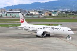 なかすぃ~さんが、伊丹空港で撮影した日本航空 787-8 Dreamlinerの航空フォト(飛行機 写真・画像)