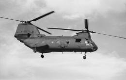 Night Owlさんが、厚木飛行場で撮影したアメリカ海兵隊 CH-46Dの航空フォト(飛行機 写真・画像)