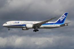 キイロイトリさんが、伊丹空港で撮影した全日空 787-8 Dreamlinerの航空フォト(飛行機 写真・画像)