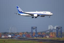 ▲®さんが、羽田空港で撮影した全日空 787-8 Dreamlinerの航空フォト(飛行機 写真・画像)