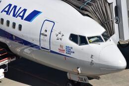 しめぎさんが、仙台空港で撮影した全日空 737-881の航空フォト(飛行機 写真・画像)