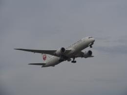 Super Dolphinさんが、羽田空港で撮影した日本航空 787-8 Dreamlinerの航空フォト(飛行機 写真・画像)