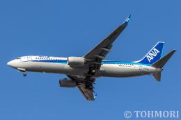 遠森一郎さんが、福岡空港で撮影した全日空 737-8ALの航空フォト(飛行機 写真・画像)