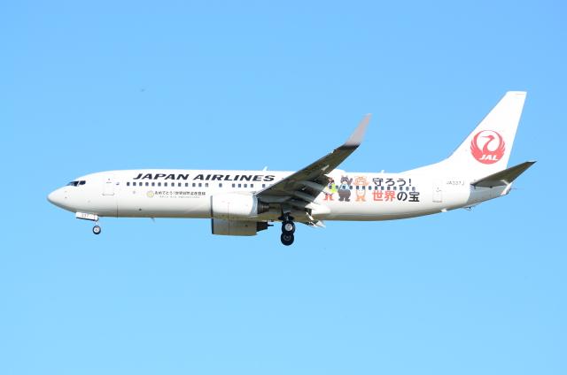 ITM58さんが、小松空港で撮影した日本航空 737-846の航空フォト(飛行機 写真・画像)