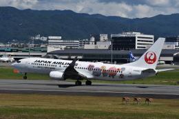 空が大好き!さんが、伊丹空港で撮影した日本航空 737-846の航空フォト(飛行機 写真・画像)