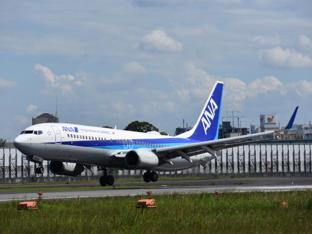 空が大好き!さんが、伊丹空港で撮影した全日空 737-881の航空フォト(飛行機 写真・画像)