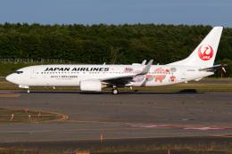 Snowman☃️さんが、新千歳空港で撮影した日本航空 737-846の航空フォト(飛行機 写真・画像)