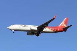 Love NRTさんが、成田国際空港で撮影した深圳航空 737-87Lの航空フォト(飛行機 写真・画像)
