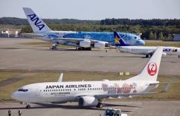 GRX135さんが、新千歳空港で撮影した日本航空 737-846の航空フォト(飛行機 写真・画像)
