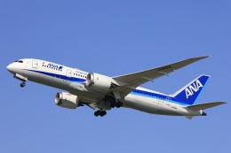 Fly Yokotayaさんが、伊丹空港で撮影した全日空 787-8 Dreamlinerの航空フォト(飛行機 写真・画像)
