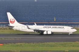 fly A340さんが、羽田空港で撮影した日本航空 737-846の航空フォト(飛行機 写真・画像)
