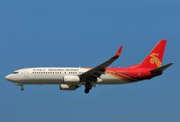 シグナス021さんが、成田国際空港で撮影した深圳航空 737-87Lの航空フォト(飛行機 写真・画像)
