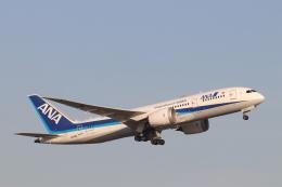 天王寺王子さんが、羽田空港で撮影した全日空 787-8 Dreamlinerの航空フォト(飛行機 写真・画像)