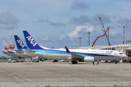 安芸あすかさんが、石垣空港で撮影した全日空 737-881の航空フォト(飛行機 写真・画像)