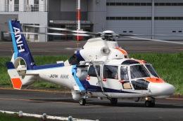 きりしまさんが、東京ヘリポートで撮影したオールニッポンヘリコプター AS365N3 Dauphin 2の航空フォト(飛行機 写真・画像)