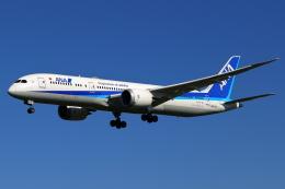 こだしさんが、成田国際空港で撮影した全日空 787-9の航空フォト(飛行機 写真・画像)